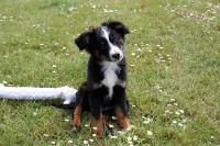 Hobie (Finkes Justin, født 11/3-2012)