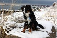 Hobie (Finkes Justin, född 11/3-2012).