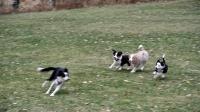 Nikita, Nahla och Kiwi jagar mamma Bianca